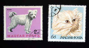 Hungary stamps. Hungarian postage stamps from Hungary (European Union) with cat and dog Stock Images