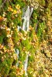 Hungary, Szalajka-valley in autumn Royalty Free Stock Photos