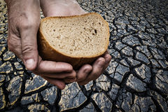 Hunger - old hand holding bread. Hunger - old hand holding a bread Royalty Free Stock Photo