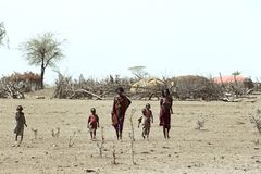 Hunger and thirst in Ethiopian desert by drought. Ethiopia, Afar region: Among the Afar population, an ethnic group of semi-nomadic cattle farmers, there is Royalty Free Stock Photography