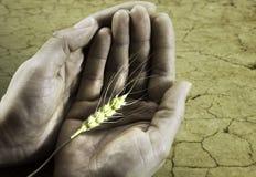 Hungern Sie Konzept auf der Erde und den interessierenden Händen Lizenzfreie Stockfotografie