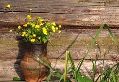 Hungerweeds in Ceramic Pot Royalty Free Stock Image