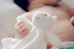 Babby teddy bear royalty free stock photography