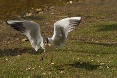 hungrig fågel Royaltyfri Fotografi