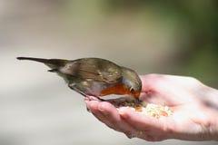 Hungrig fågel i handen arkivbild