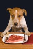 Hungrig hund. Fotografering för Bildbyråer