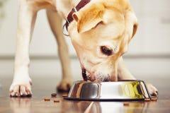 hungrig hund Fotografering för Bildbyråer