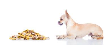 Hungrig hund med ägarehanden Royaltyfria Bilder