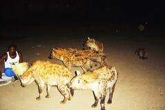 hungrig hyena Fotografering för Bildbyråer