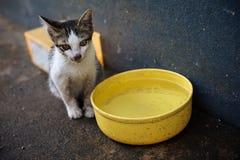 Hungrig katt arkivfoto