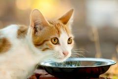 Hungrig kattunge Royaltyfria Bilder