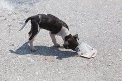 Hungrig tillfällig hund Royaltyfria Bilder