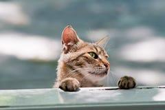 Hungriga Cat Looking In The Window Arkivfoton