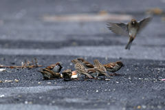 hungriga fåglar arkivfoto