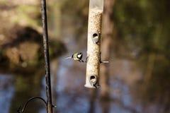 Hungriga fåglar Arkivbild