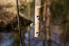 Hungriga fåglar Arkivfoton