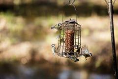 Hungriga fåglar Arkivbilder