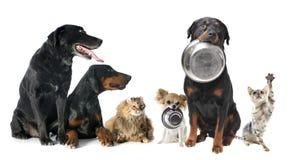 Hungriga husdjur royaltyfri bild