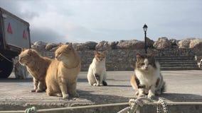 Hungriga katter möter fiskaren Boat i en grekisk port arkivfilmer