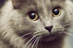 Hungrige Augen Lizenzfreies Stockfoto