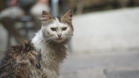 Hungrige Katze, die etwas Lebensmittel sucht Lizenzfreie Stockfotos