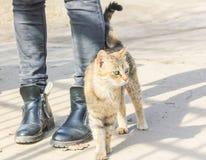 Hungrige Katze reibt gegen die Beine eines Passanten Lizenzfreies Stockfoto