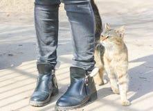 Hungrige Katze reibt gegen die Beine eines Passanten Straßenkatze an hallo Lizenzfreies Stockbild