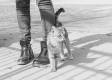 Hungrige Katze reibt gegen die Beine eines Passanten Straßenkatze an hallo Stockfotografie
