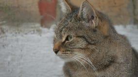 Hungrige obdachlose Katze des Porträts auf der Straßennahaufnahme schaut das Sitzen traurig stock footage