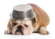 Hungriger Hund Lizenzfreie Stockbilder