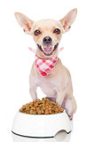 Hungriger Hund Lizenzfreie Stockfotografie