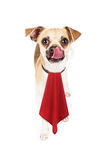 Hungriger Hund, der die rote Serviette leckt Lippen trägt Stockbild