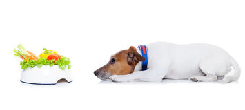 Hungriger Hund mit gesunder Schüssel lizenzfreies stockfoto