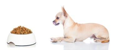 Hungriger Hund mit Schüssel Lizenzfreies Stockfoto