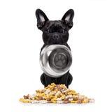 Hungriger Hund mit Schüssel Lizenzfreie Stockfotografie