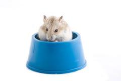 Hungriger kleiner Hamster. Lizenzfreie Stockbilder