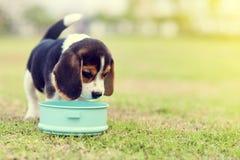 Hungriger Spürhund stockfotos