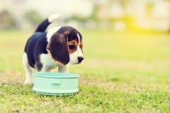 Hungriger Spürhund lizenzfreies stockbild