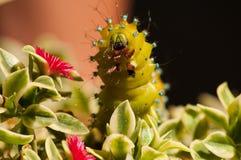 Hungriges Caterpillar stockbilder