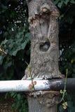 Hungrigt trä Arkivbilder