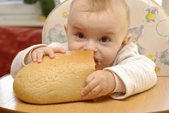Hungry baby. Eating the fresh bread Stock Images