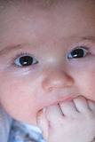 Hungry baby. Close up of baby face Royalty Free Stock Photos