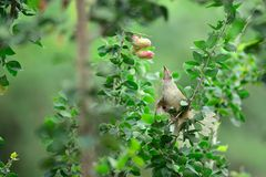 Hungry Bird Stock Photos
