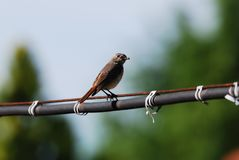 Little bird is hunting Stock Images