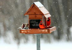 Hungry birds at feeder in winter Stock Photo