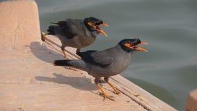HUNGRY BIRDS Stock Image