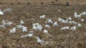 Hungry birds stock video