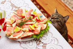 Hungry cat royalty free stock photos