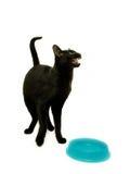 Hungry Cat. By empty feeding bowl Royalty Free Stock Photo