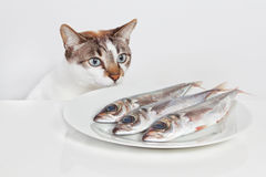 A hungry cat. A hungry cat looking at fish in the kitchen Stock Photo